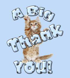 Thank You Ecards * Free Thank You Greeting Cards * Thank You Cards * Thank You Card * Free Thank You Cards Thank You Qoutes, Thank You Gifs, Thank You Pictures, Thank You Images, Thank You Greeting Cards, Free Thank You Cards, Thank You Greetings, Thank You Gracias, Thanks Gif