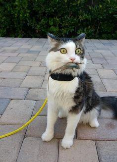 Забавные фотографии котиков
