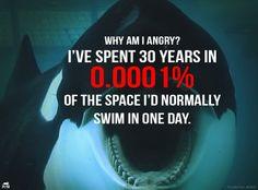 boycott SeaWorld!! #blackfish #thecove   e q u a l i t y ...
