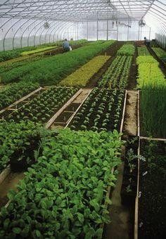 Eliot Coleman: The 3 Components of the Winter Harvest Vegetable Garden Planner, Vegetable Farming, Veg Garden, Vegetable Garden Design, Greenhouse Farming, Hydroponic Gardening, Harvest Farm, Farm Layout, City Farm