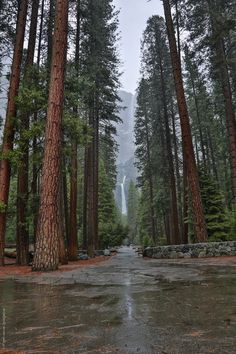See Yosemite. The Top Yosemite Things To Do. If you go to Yosemite things to do are in abundance. However, there are a few things that should be at the top of your list. The top things you'll want to Big Sur California, California Winter, Cool Pictures Of Nature, Cool Photos, Amazing Photos, Beautiful Pictures, Yosemite National Park, National Parks, Yosemite Waterfalls