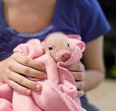 what a sweet baby pig ♥
