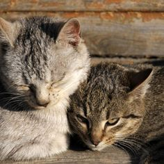 Households with indoor/outdoor pets are more likely to get flea infestations.