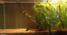 Biotope Aquarium Design Contest 2014. Quality test | Все для аквариума, террариума и пруда