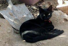 #cat #black #collar #myregalon #mylove #tierra #mirada