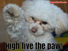 HIGH FIVE THE PAW!!!