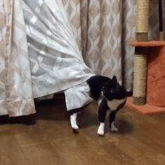 Curiosity got the cat stuck again.