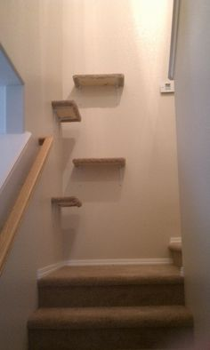 "Deals Worth Mentioning: DIY Cat Shelves. I like how they used the ""dead"" space in a staircase to enrich their kitties!"