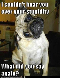 cute pugs with captions | Has A Hotdog - stupid - Loldogs n Cute Puppies - funny dog pictures ...