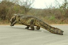Alligator Hunting in the Okefenokee Swamp, GA -and you do see them walking down the roads if you stay in a cabin...