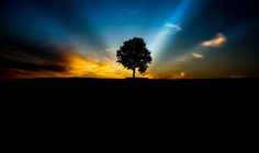 The Art Of Photographing Trees - Nature photography is probably one of the most popular genres of photography. Though most photographers con...
