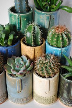 Potted cacti in handmade pottery