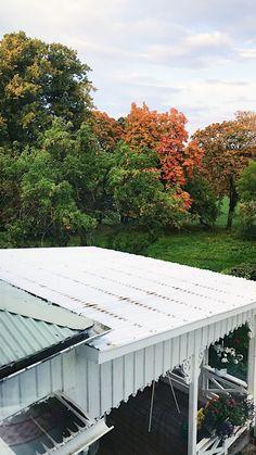 #nordic# appletrees# autumn#autumnleaves