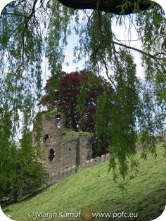 Castle ruins hidden by willow tree