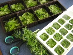 Bazalka - pestovanie a použitie v kuchyni (fotopostup) - obrázok 18 Kitchen, Cooking, Kitchens, Cuisine, Cucina