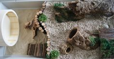 Obi's natural set up is complete! - Hamster Central