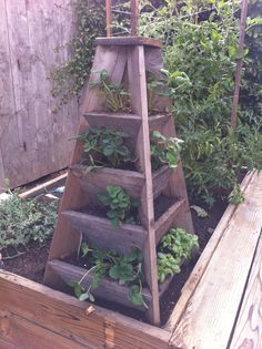 strawberry box.  would be great for herbs.