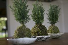 Create a carefree, green-centric table arrangement by using kokedama, a bonsai form of plants with roots tightly bound in sphagnum moss.