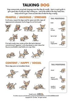 Dogs | Tipsögraphic | More dogs tips at http://www.tipsographic.com/