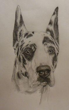 Shameera- Great Dane Sketch by xx-ashley on DeviantArt