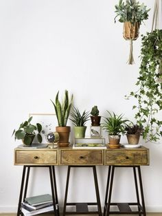 A vignette of hanging plants and plants on a table