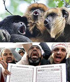 Islamic screamers