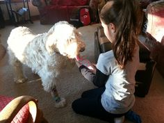 Grandaughter putting sox on Poppy...this will be followed by ultra paws...which DONOT come off till ee take thm off!