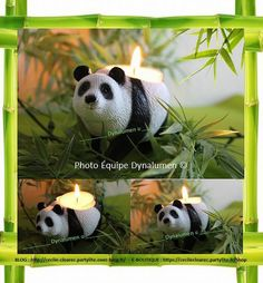 Bébé Panda PartyLite / Zoom Photo et montage Cécile Cloarec conseillère PartyLite