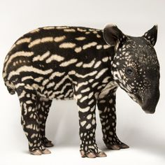 """photo by @joelsartore 