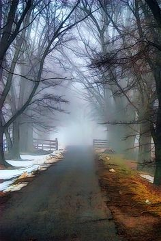 Mist in the morning as you are walking down the lane.