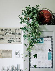 Zimmerpflanzen für die etwas grünere Aufbewahrung, z. B. mit HEDERA HELIX Pflanze Efeu