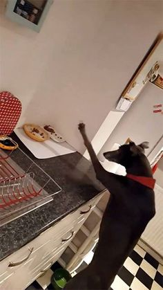 """""""I opened the drawer to stop him getting the cat food"""" Wait for it..."""