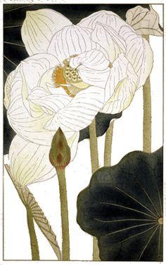 『非水百花譜』20集(昭和4年~9年春陽堂)はす (蓮)Sugiura Hisui