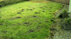 Moles Be Gone - Mole Abatement That Works!
