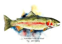 Image Detail for - ... trout watercolor this one as you can see is titled rainbow trout on