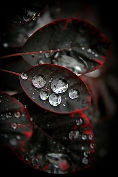 #droplets #water #leafs #nature #photography