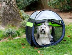Enter the  Petmate Walk in the Park Giveaway on To Dog With Love to win a Petmate Travel Bowl, Waste Bags and Dispenser, Tug-O-Rama Toy, Leash and portable Pop-Up Tent. Ends 4/15/14