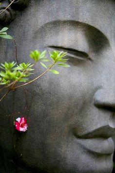 images populaires: zen gratuites