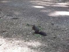 Der Eichhörnchenwald in Fischen im Allgäu