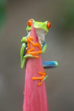 Tree Frog !