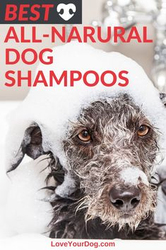 Finding a natural dog shampoo can make the difference between a healthy and hydrated coat, and uncomfortable or itchy skin. Natural ingredients are less likely to irritate your pup's skin! Find out waht our top picks are! R Dogs, Dogs And Puppies, Big Dog Toys, Asian Dogs, Natural Dog Shampoo, English Dogs, Dog Organization, Dog Grooming Shop, Cute Dog Collars