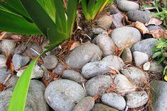 Outdoor Classroom: guide to garden mulches