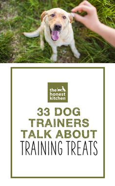 Training treats are a vital tool in the dog training process. We talked with 33 dog trainers to find out how they choose and use treats for training.  #THK #honestkitchen #thehonestkitchen #dog #dogs #health #lifestyle #training