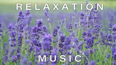6 Hours Beautiful Relaxing Music - Best For Stress Relief, Meditation, Calm, Deep Sleep & Spa Waking Up Tired, Youre Not Alone, Sleep Issues, Instagram Giveaway, Sleep Problems, Relaxing Music, Good Mood, Stress Relief, Fun Workouts