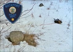 A dead dog, shot in the head and left on the side of the road, was discovered Monday on Mt. Pleasant near the power line and the hiking trail near Grassy Pond. (Courtesy Rockport Police Department)