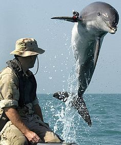 """Killer Ukrainian dolphins on the loose"" Be sure to click, scroll and read the updates at the bottom of the article. Seems there may have been an exaggeration on this topic. I know for a fact that the pic used is of a USA trained dolphin named K-Dog."