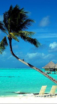 Lone palm on the beach at Bora Bora, French Polynesia • photo: pxc on deviantart