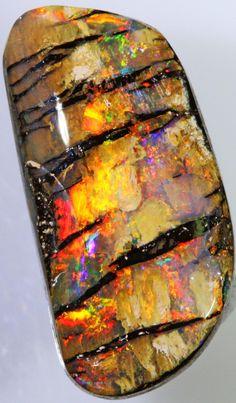 Opalized Wood - Blackgate Opal Fields, Queensland, Australia