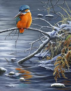 Winter Fishing - Kingfisher, by UK Wildlife Artist Jeremy Paul