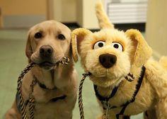 """un chien et son """"doudou"""""""